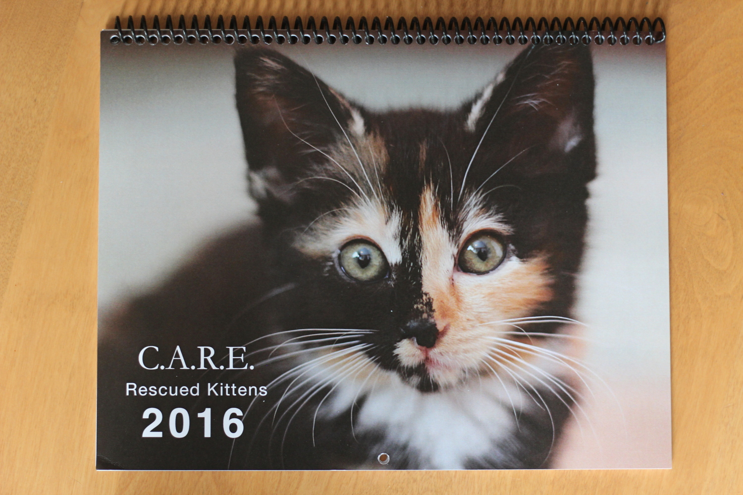 All about kittens care